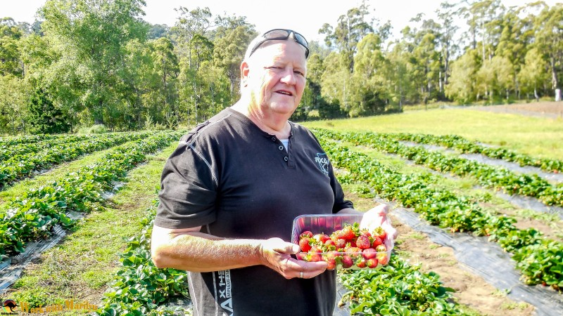 My husband with fresh strawberries he'd just picked