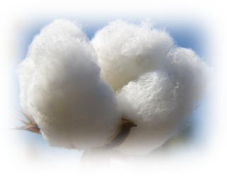 Cotton balls look so fresh and clean