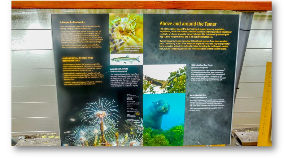 Information boards along the way. This one tells us about the kind of sealife that can be found in the Tamar River... including sea horses and Fur Seals