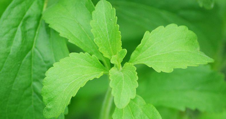 Naturally sweet Stevia